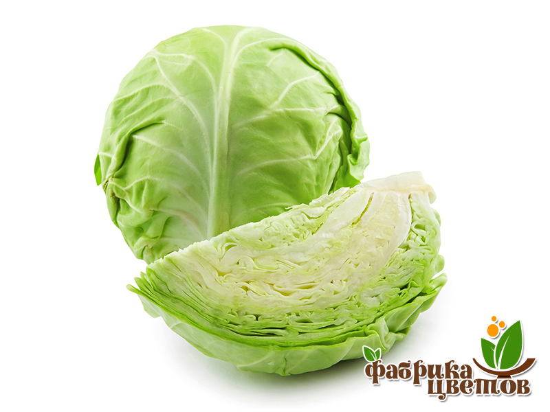 cabbage-0