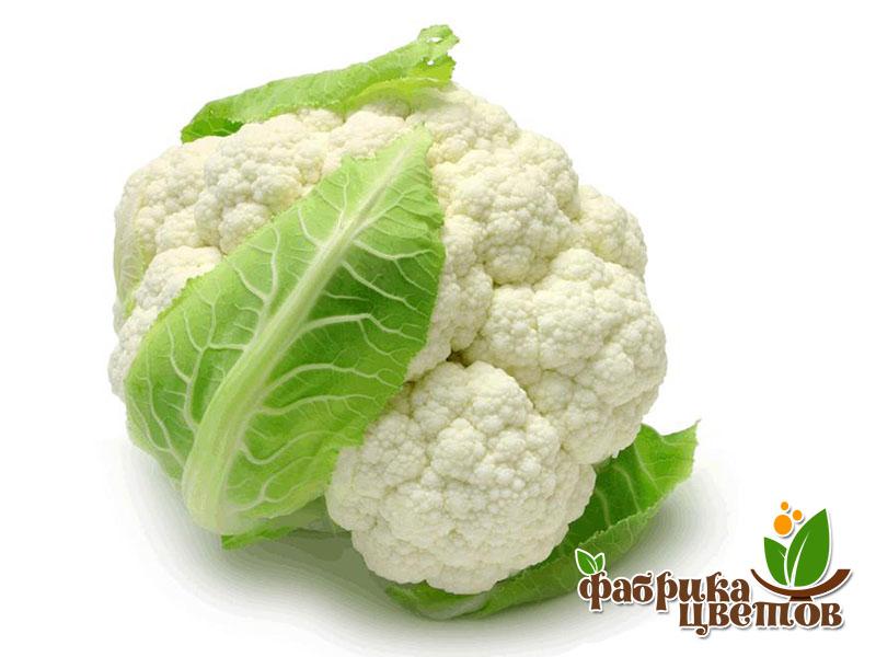 cauliflower-0