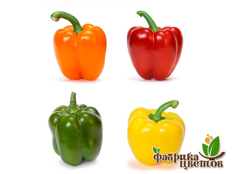 pepper-10