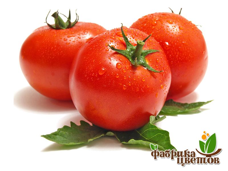 tomatoes-0