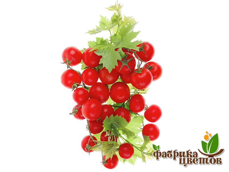 tomatoes-4