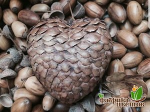Сердце из чешуек шишки